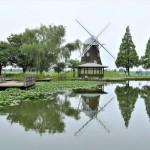 【あけぼの山農業公園】風車広場前-ハス池の睡蓮が少し咲いています-