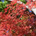 【あけぼの山公園】日本庭園