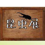 【5/2~5/5】昆虫展 開催