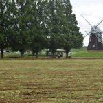 【あけぼの山農業公園】8月2日(月)風車前花畑ヒマワリは刈り取りました。