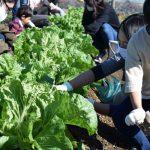 【9/12】親子土いじり体験「畑っこくらぶ」開催 ※受付は終了しました